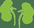 kidneys-icon