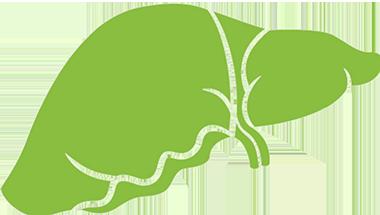 liver-icon